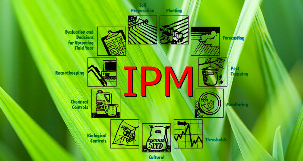 what-is-ipm